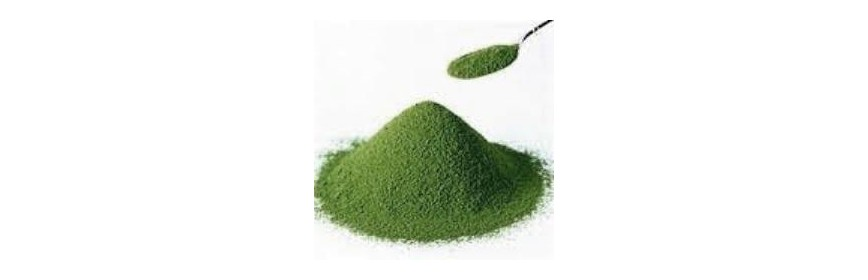 Spirulina in powder