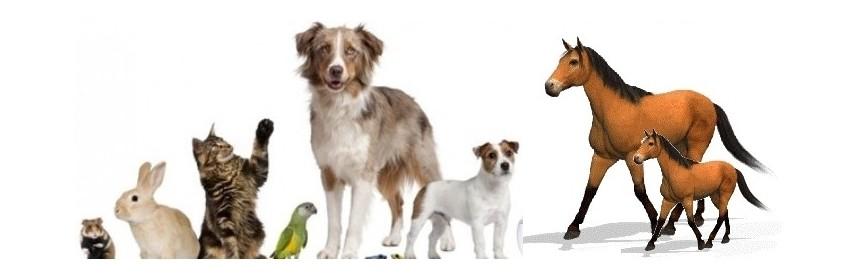 Animals and spirulina